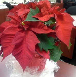where can i buy a christmas tree in brooklyn ny